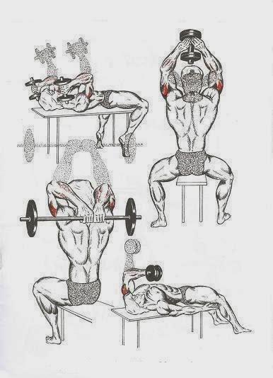 Программа с гантелями на все группы мышц