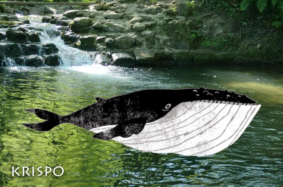 fotomontaje de una ballena en un estanque