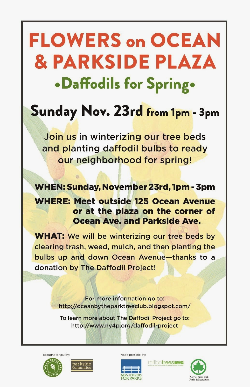 Nov 21 - Daffodils R Us