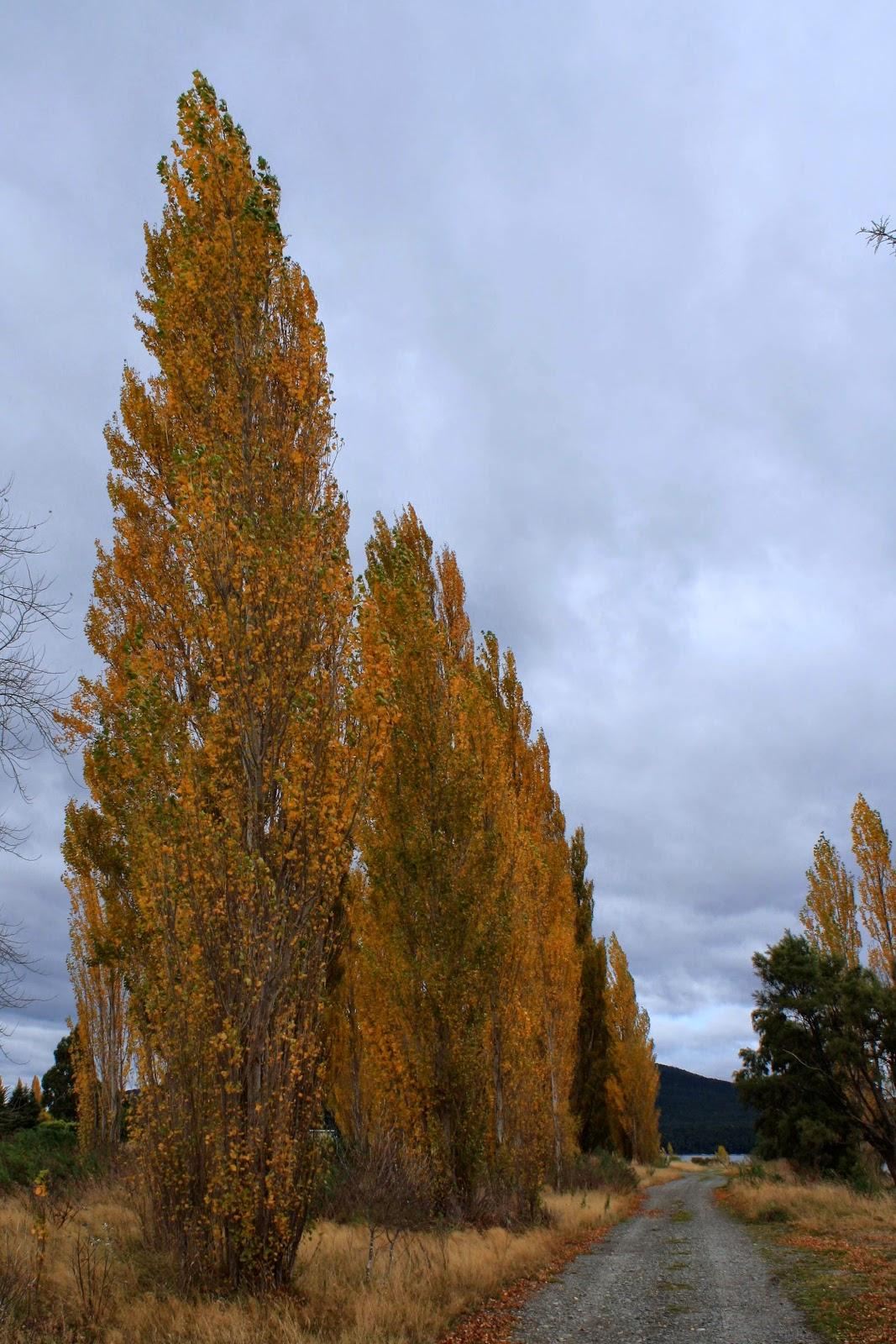 More orange trees.