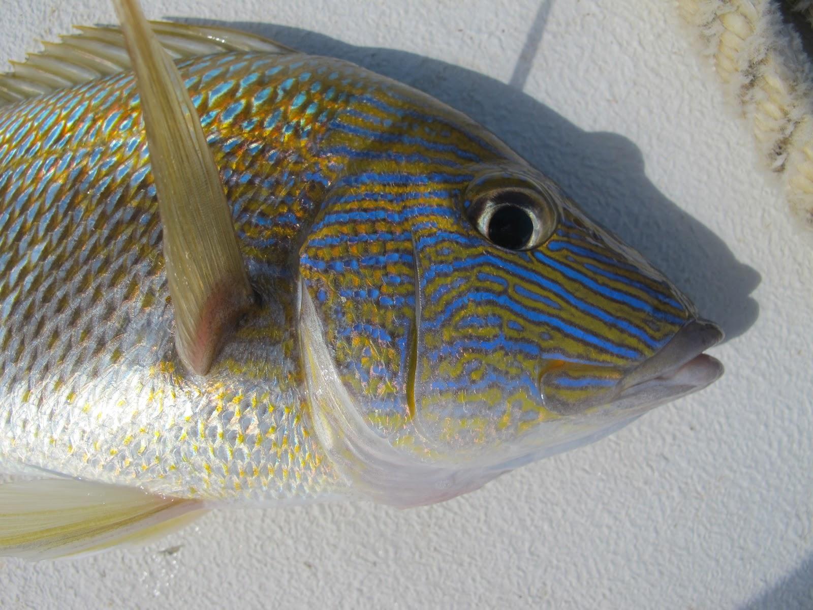 In the footsteps of steve wozniak viva mexico for White fish types