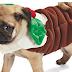Μόδα για σκύλους και τα Χριστούγεννα...