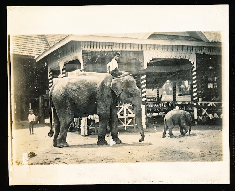 Elephant Being Ridden by an Indian Man along with a Baby Elephant - 1905