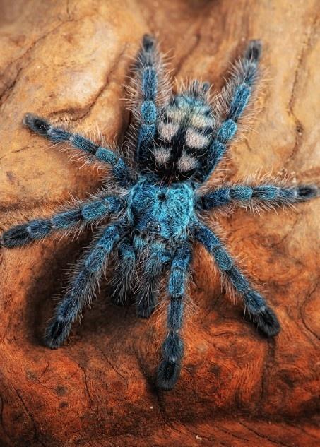 Curiosidades del Mundo: Fotos de arañas más exóticas ...