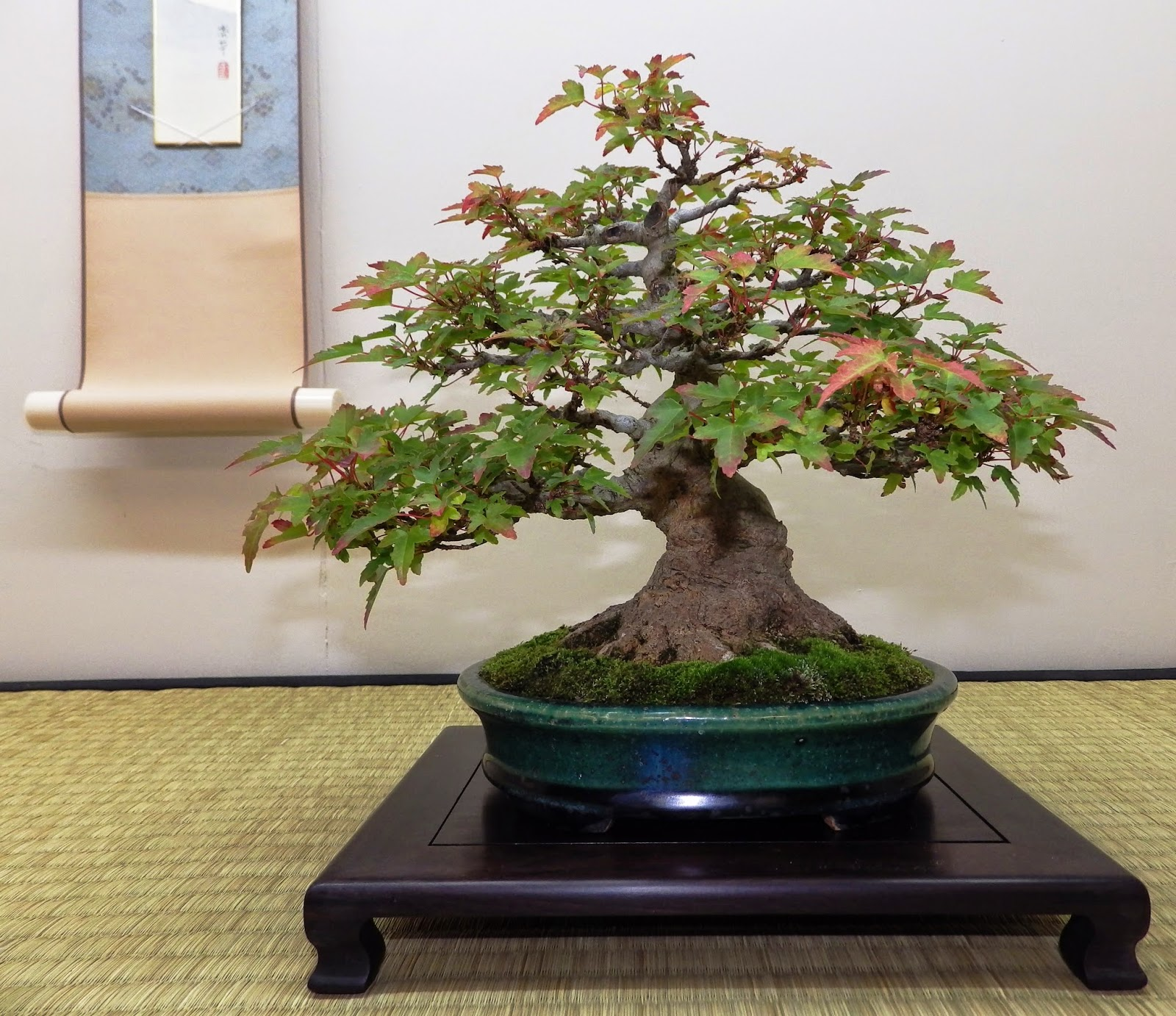 Bespoke Bonsai Stands October 2014