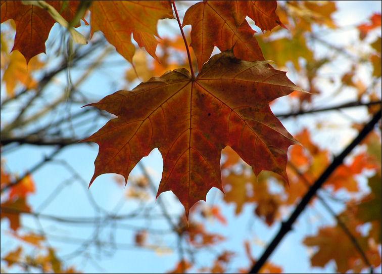 Картинки осень пасмурная дождливая