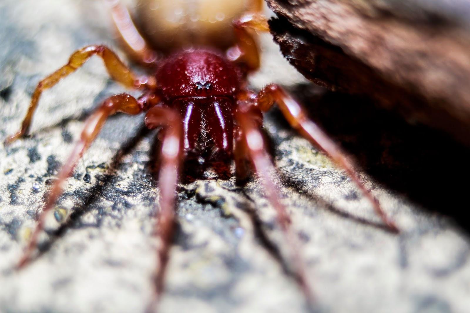 Arañas en fotosmacro