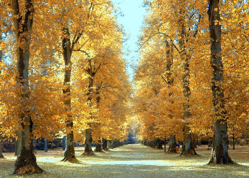 woods trees fall autumn