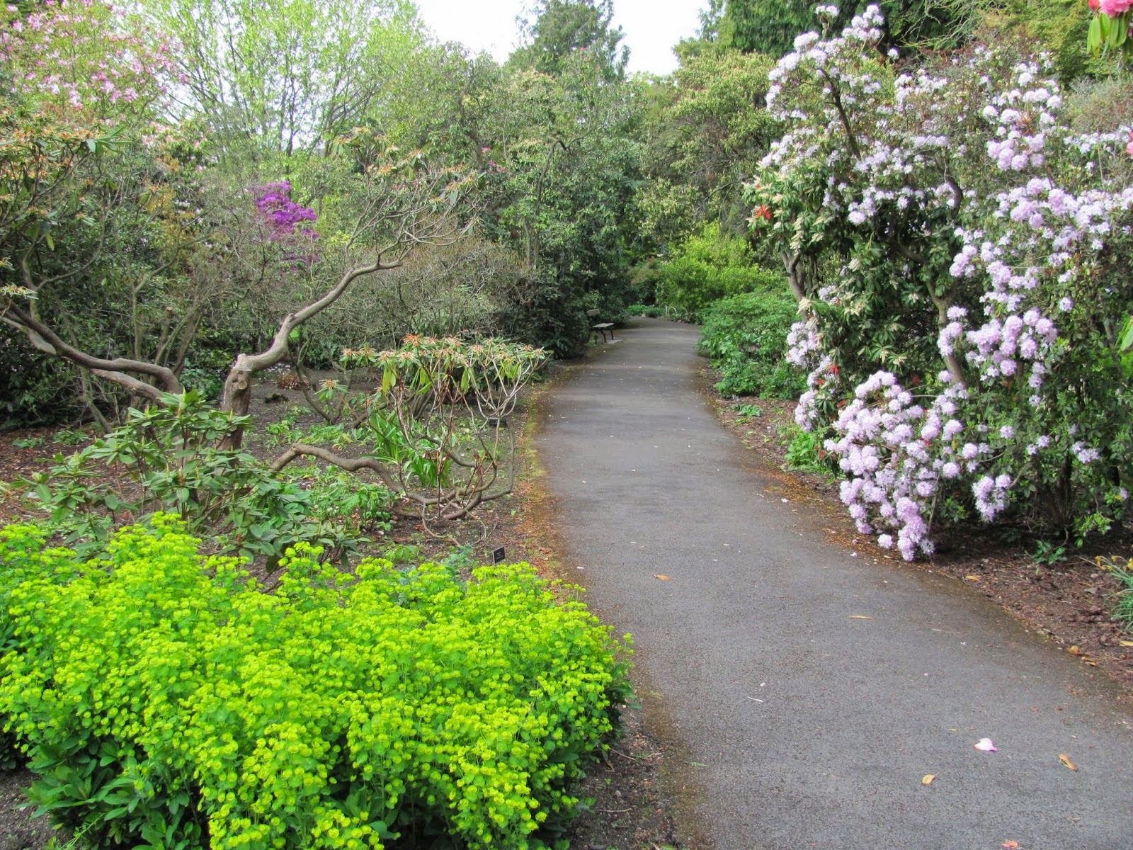 Path at National Botanic Gardens, Dublin