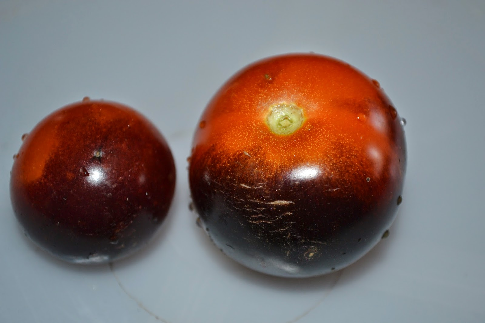 indigo rose schwarze blue rote tomatensorte tomaten bohnen pfirsich. Black Bedroom Furniture Sets. Home Design Ideas
