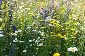 Bijenvriendelijke planten