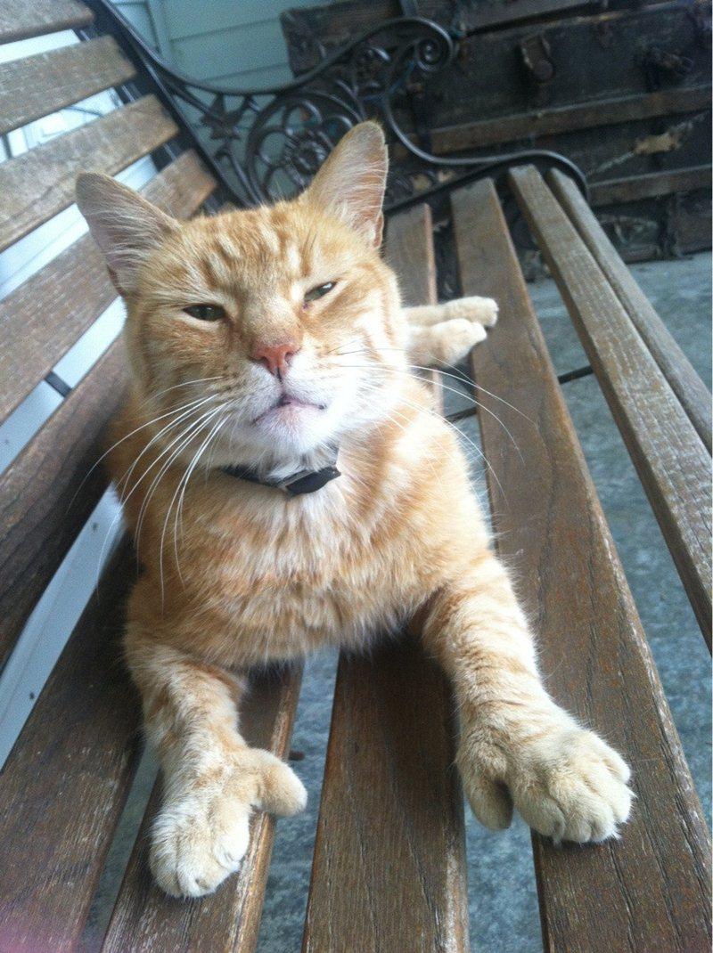 Funny cat photos, cat pics, funny cats