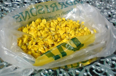 gorse flowers in a bag
