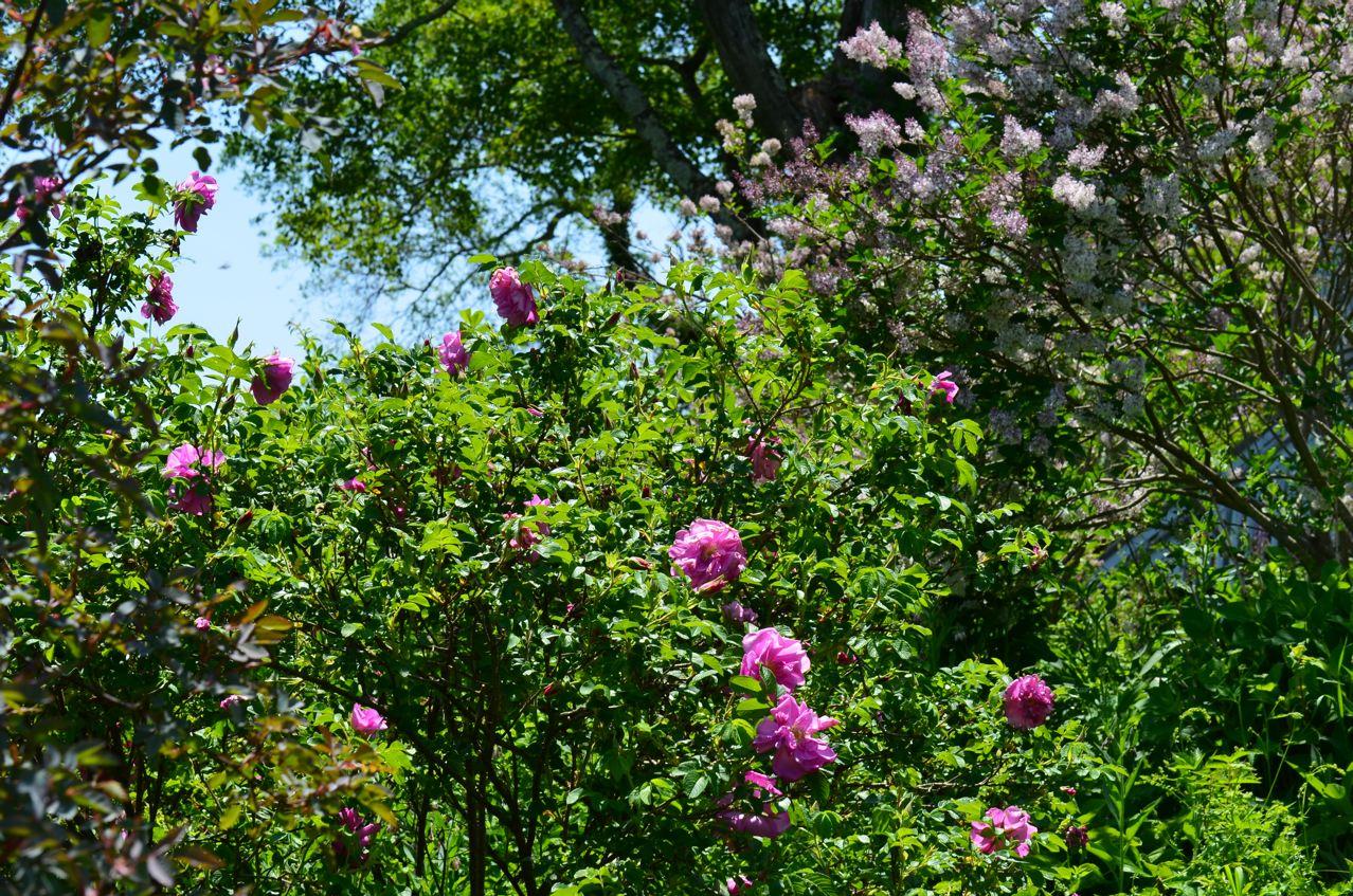 Flower hill farm play of light in a garden landscape for Flower hill farms