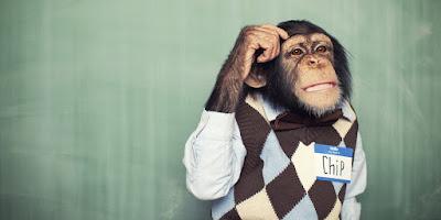 ¿Los animales piensan como nosotros?