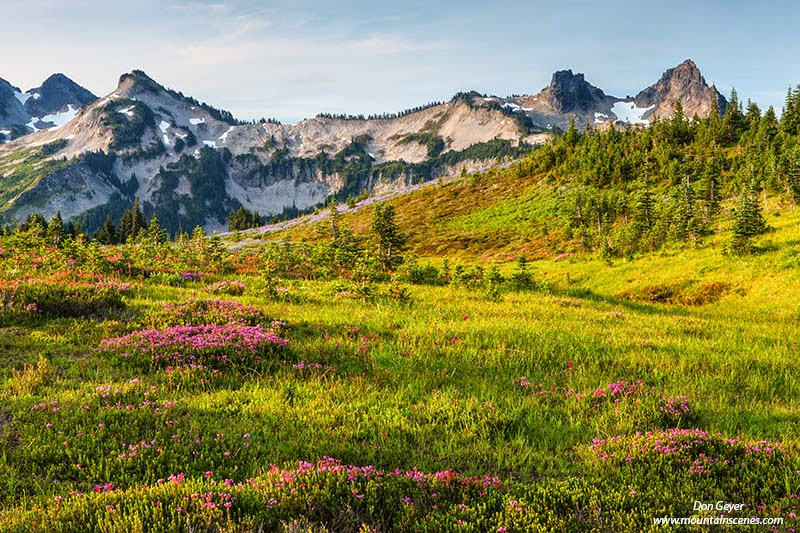 Early light on the Tatoosh Range above pink heather on Mazama Ridge in Mount Rainier National Park,Cascade Range, Washington, USA.