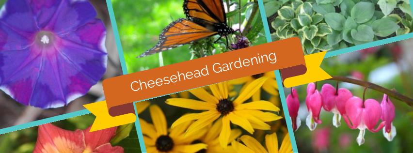 Cheesehead Gardening