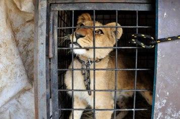 Zoo - Cativeiro de animais