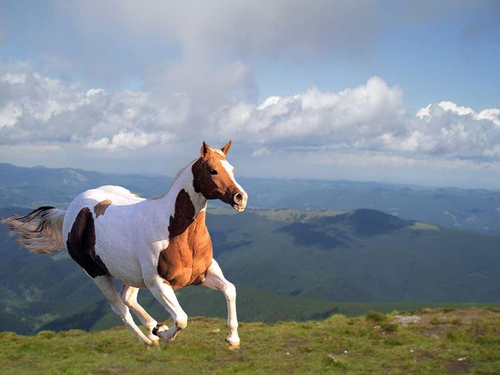 animals horse running free - photo #10