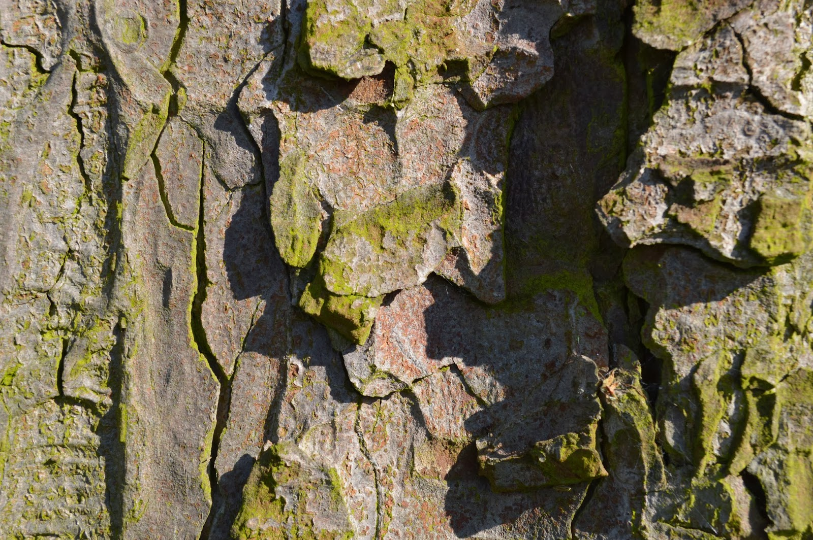 photograph, photography, Essex, Chelmsford, local, walk, park Hylands House, day out, dog walking, sunshine, building architecture, V festival, fields, flint cottage, tree, blue sky, bark, rough, texture