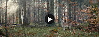 Center Parcs TV Spot