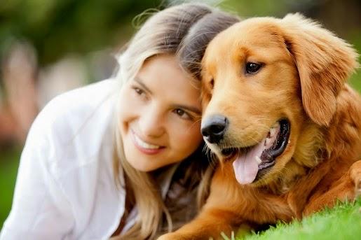 Jak nauczyć psa podstawowych komend