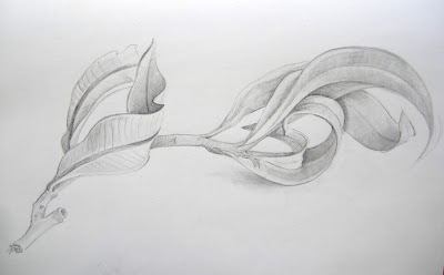 Graphite drawing of curling leaves by Shevaun Doherty