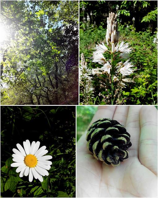 forêt de Touffou, balade, Le Bignon, fleur, bullelodie