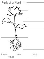 Parts of Plants Coloring Page http://al-yussanabilingue.blogspot.com/2011/03/parts-of-plant.html