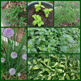 Herbs in my Garden | Navigating Hectivity by Micki Bare