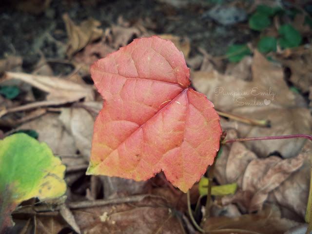 A red leaf