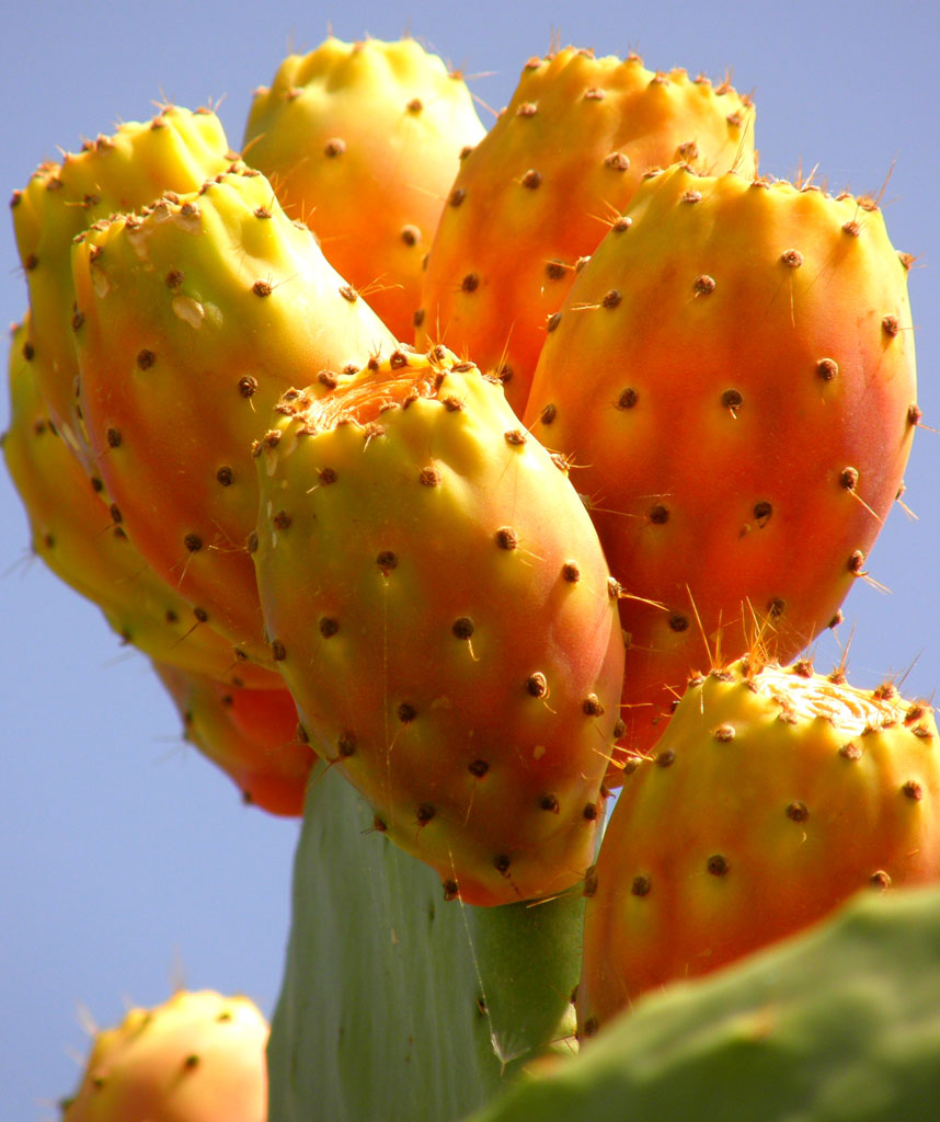 the cactus The cactus and succulent plant mall (cspm) is an internet resource for all growers of cacti and succulents it is regularly updated with information on cactus and succulent societies and suppliers of plants, seeds and literature on cacti and succulents.