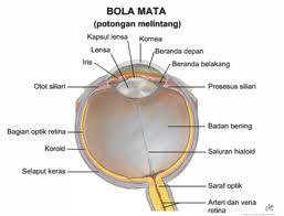 masalah seputar mata
