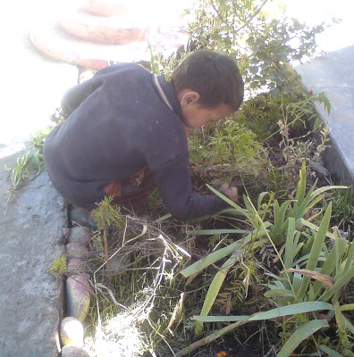 A kid doing some Gardening work in the Himalyas