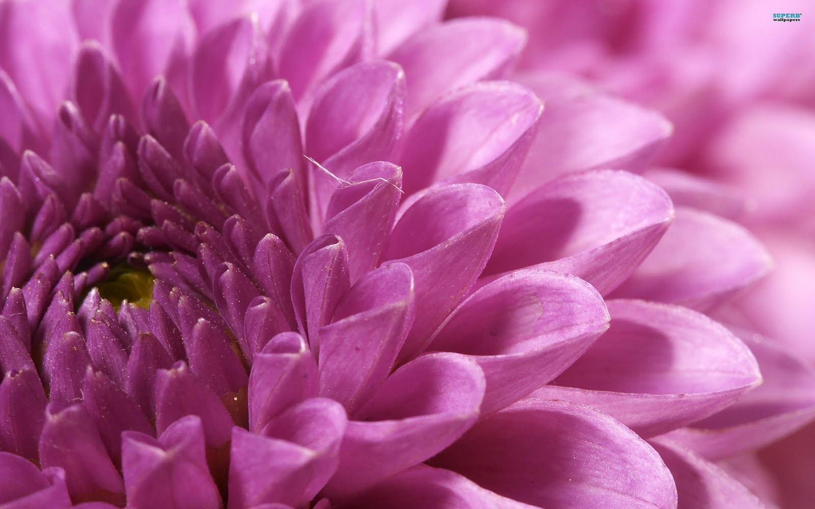 Макро обои цветы на рабочий стол