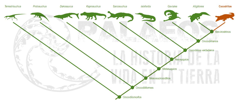 Animales extintos en los últimos años + Galerías ADN - fotos de animales extinguidos