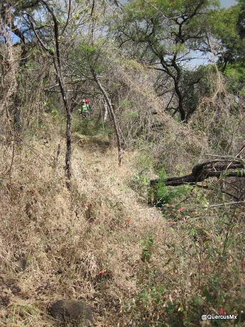 Descendiendo el Cerro Totoltepec por el bosque subcaducifolio
