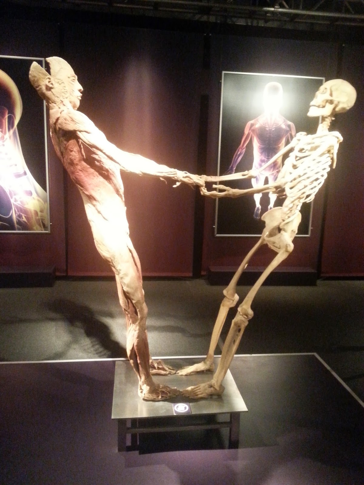 the human body data made flesh essay Meet oscar the modular real flesh body made by human other versions a pretty interesting video shared widely over internet, especially on social media sites, claims to show the prototype of first human flesh modular body in a project called oscar.