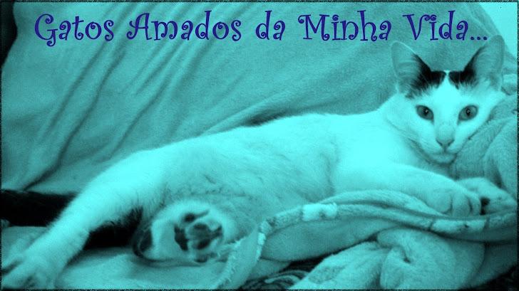 =^.^= Gatos Amados da Minha Vida =^.^=
