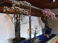 会場の慶雲館には2階にも盆梅展があった