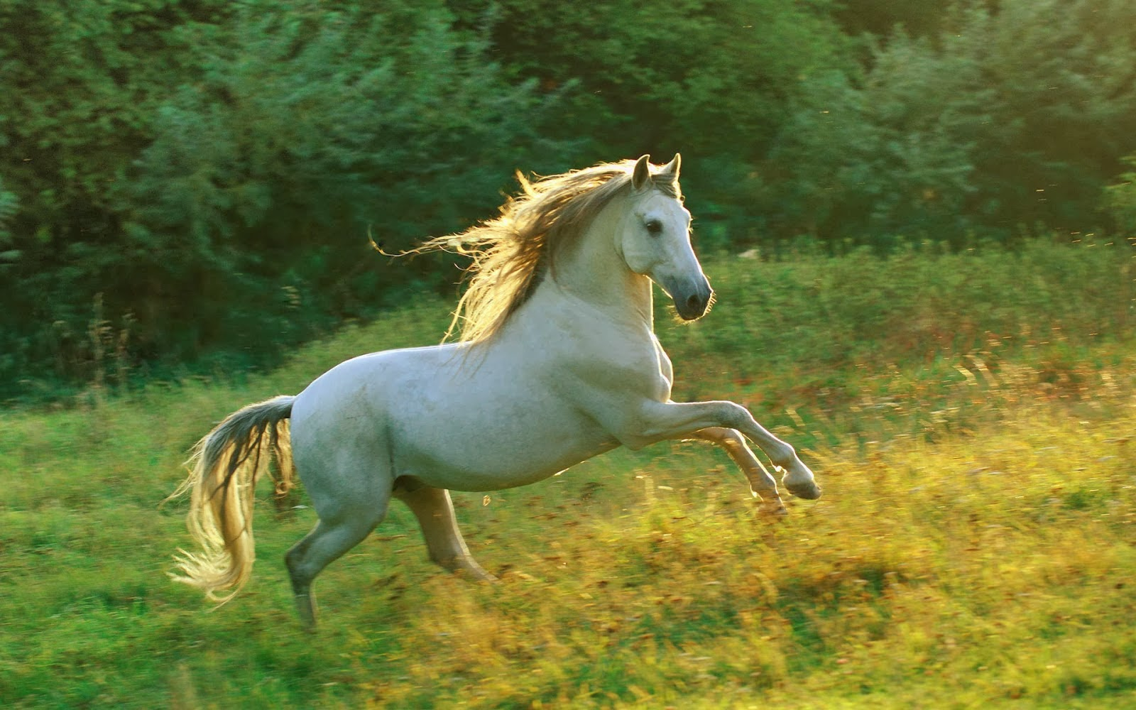 Popular   Wallpaper Horse Family - horse+wallpapers+hd+(14)  Pictures_12956.jpg