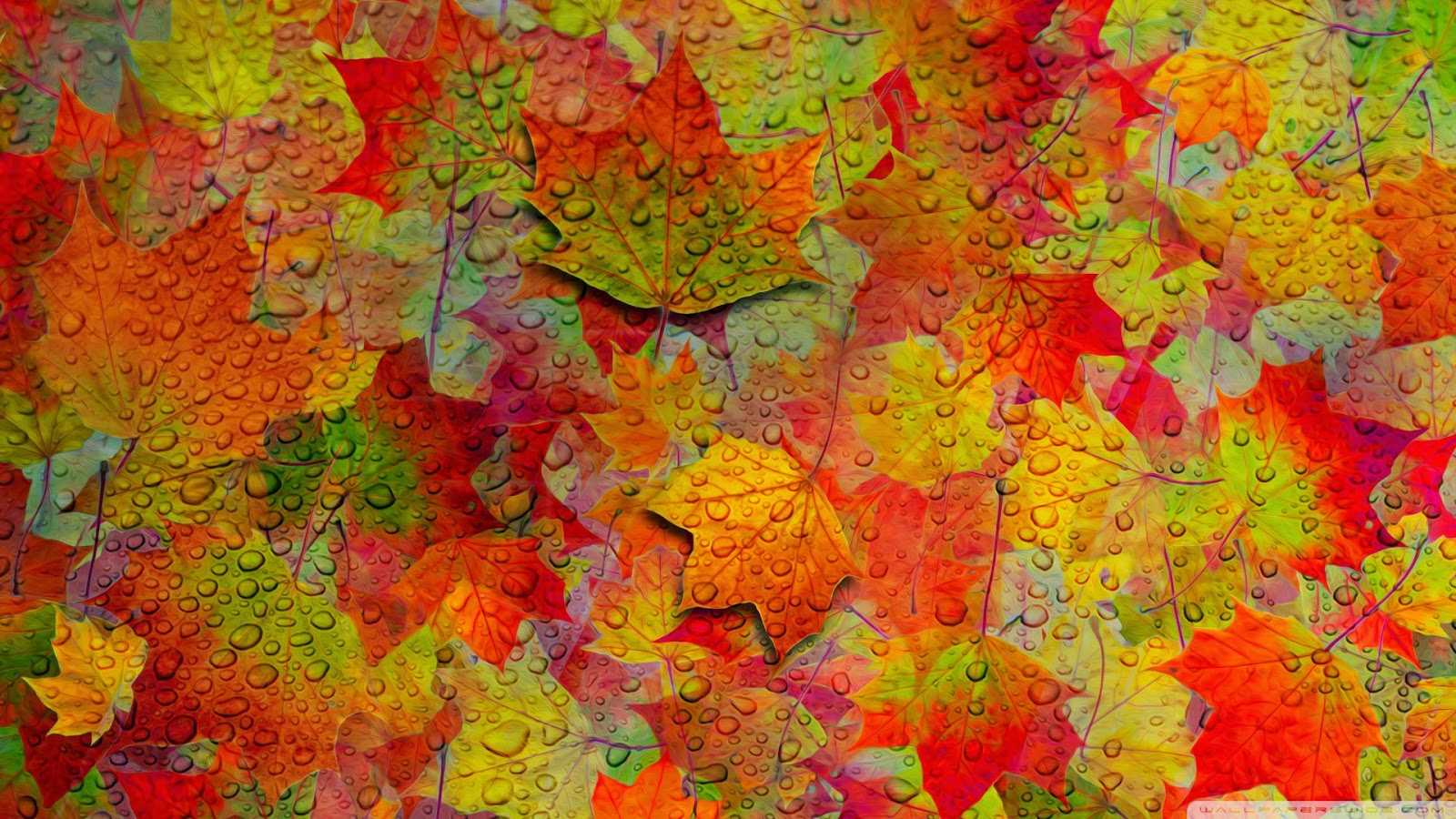 fall_8-wallpaper-1920x1080