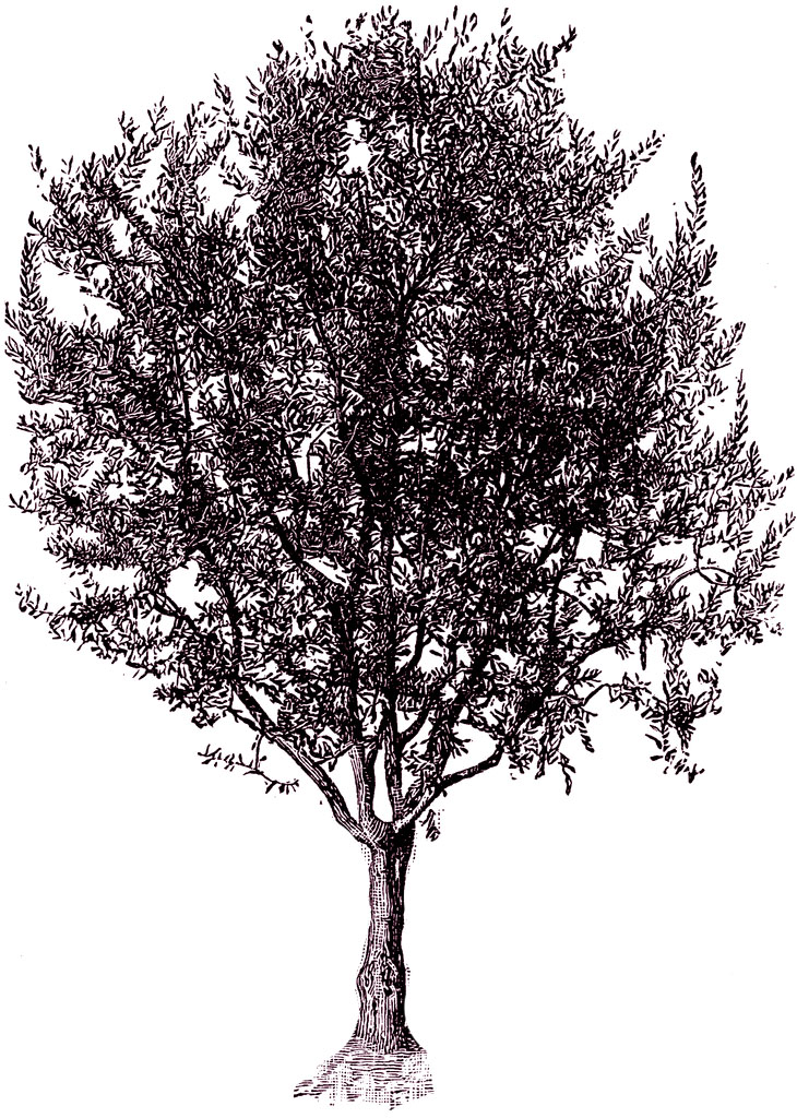 Free vintage digital stamps free vintage digital stamp hello tree a very nice tree illustration thecheapjerseys Gallery