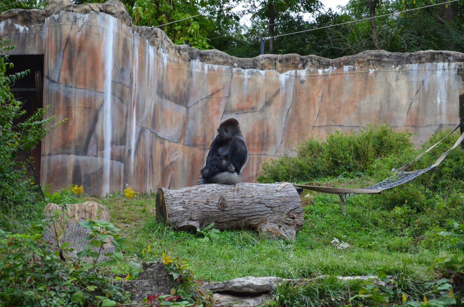 Hanging out at the St. Louis Zoo! #zoo #travel #stlouis