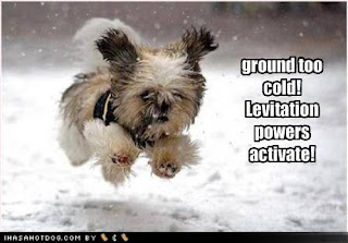 Dog Funny Picture