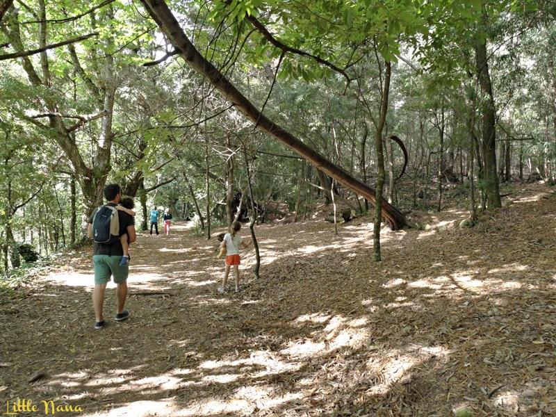 ocio infantil pontevedra bosque encantado