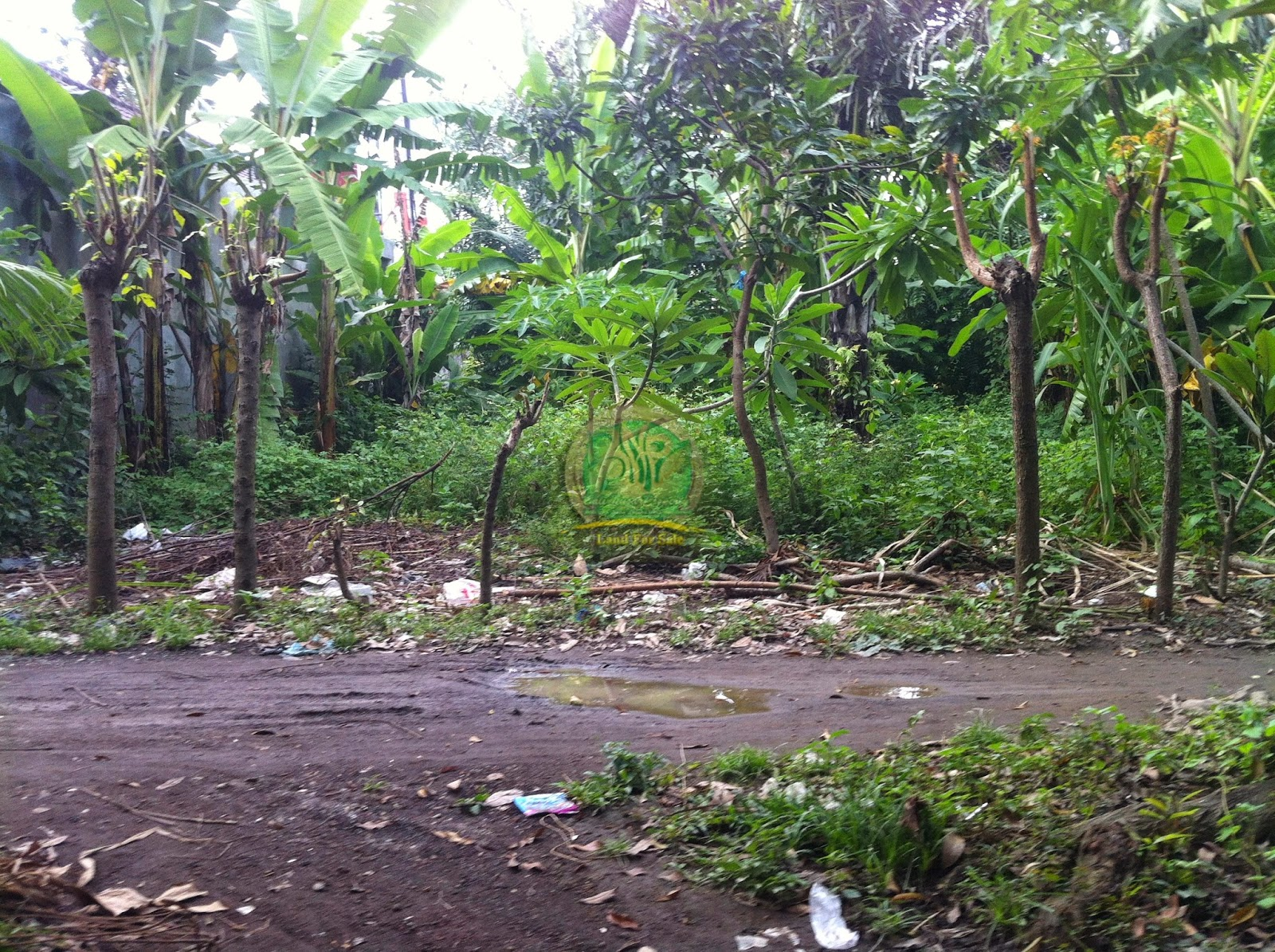 Tanah Murah Di Denpasar