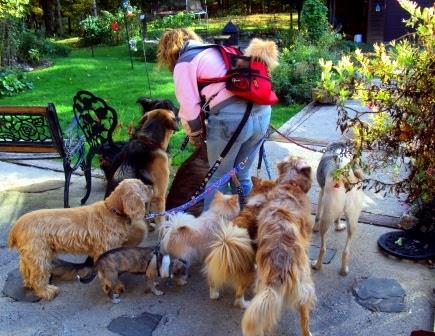 10 Common Dog Behaviors Explained - everydayhealth.com
