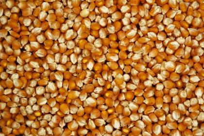 http://1.bp.blogspot.com/-RbhTyeiFLwE/ToxWmf_o2pI/AAAAAAAAApc/IPG5yaGFQwE/s1600/420x280-sound-seeds.jpg