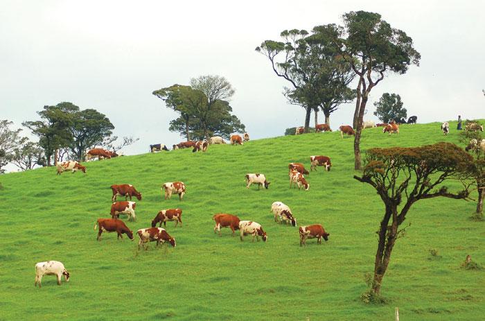 life for live ambewela beautiful places in sri lanka